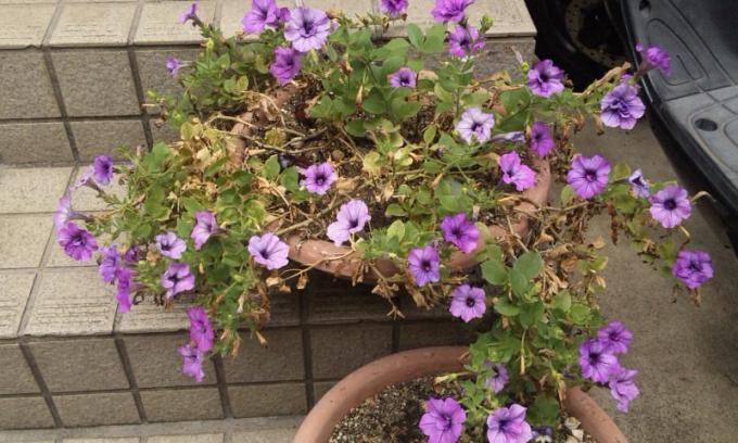FLOWER_20130821