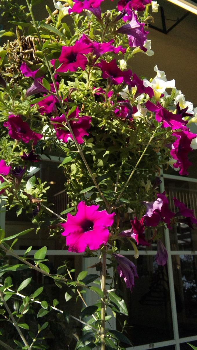 FLOWER_20130829