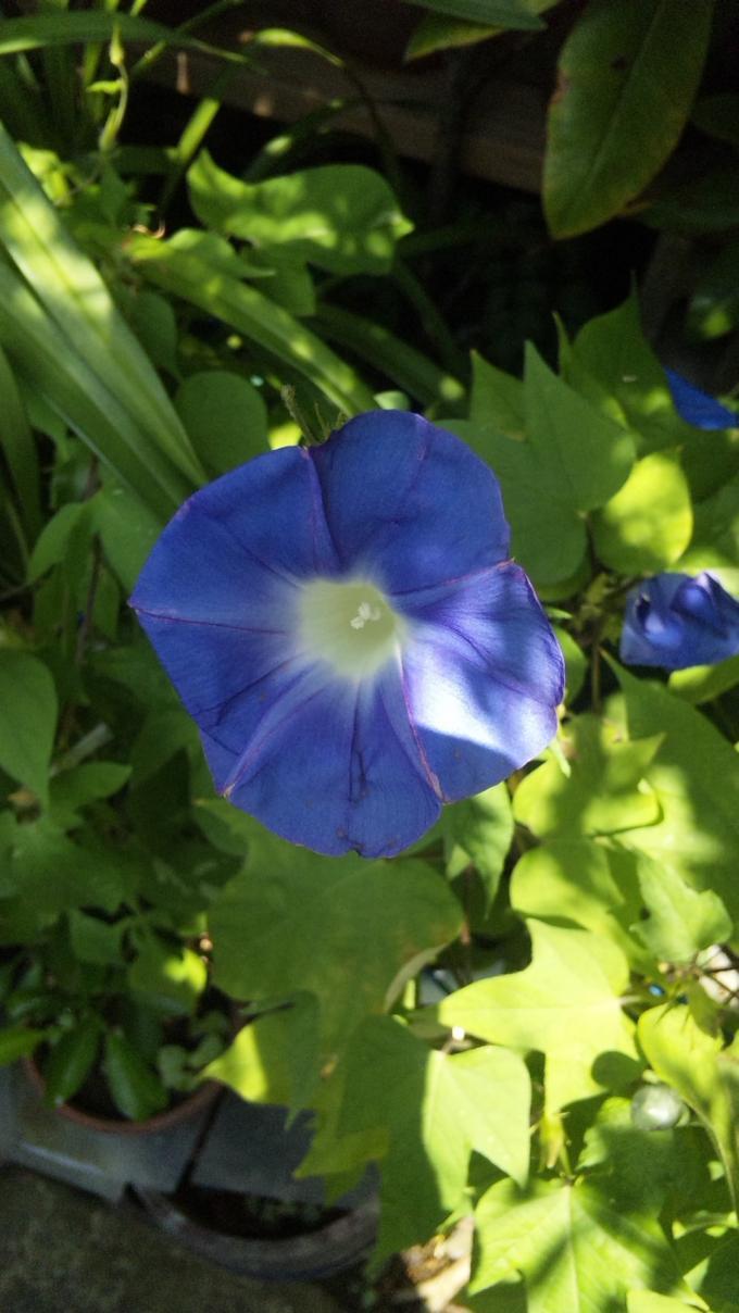 FLOWER_20130902