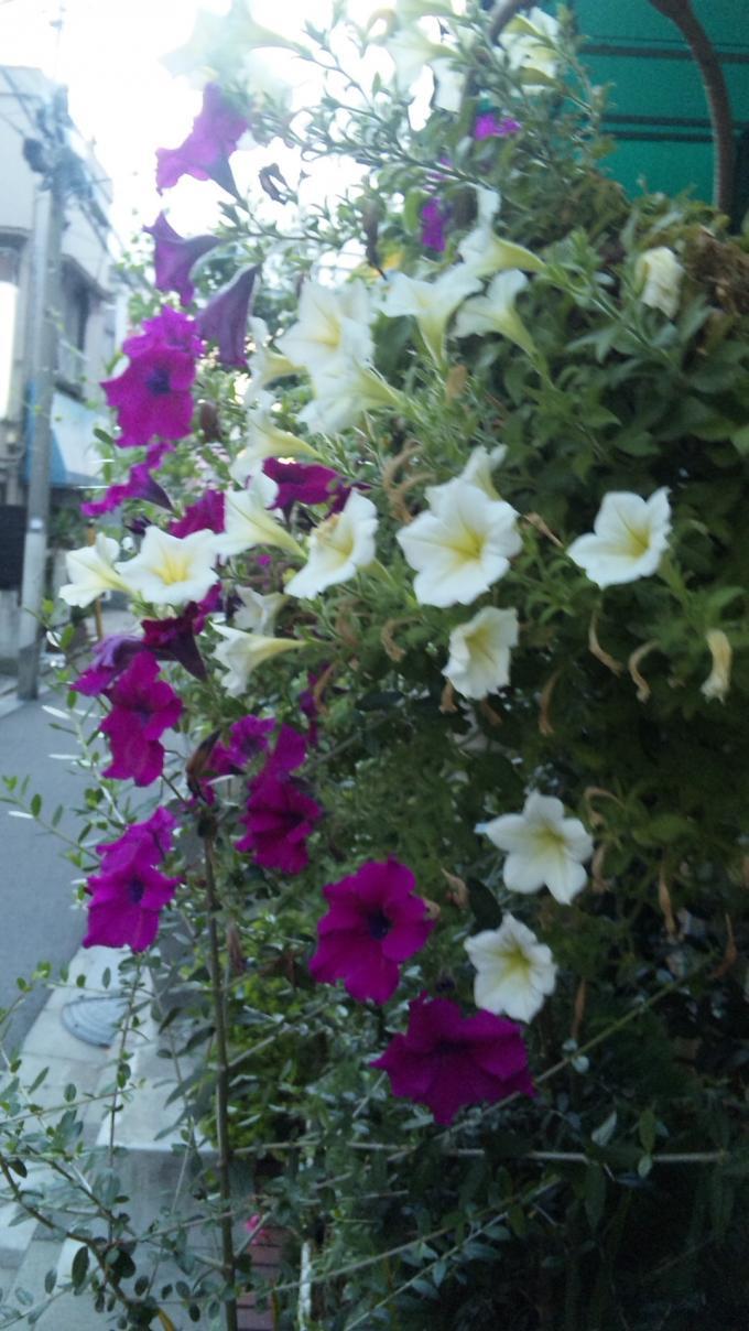 FLOWER_20130903