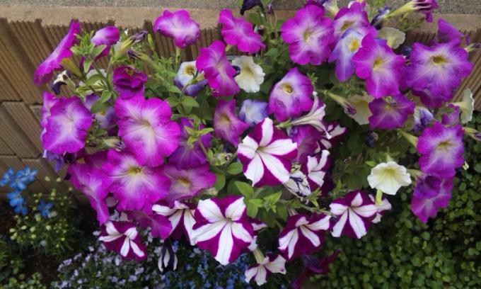 FLOWER_20130904
