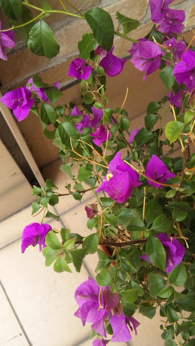 FLOWER_20130911