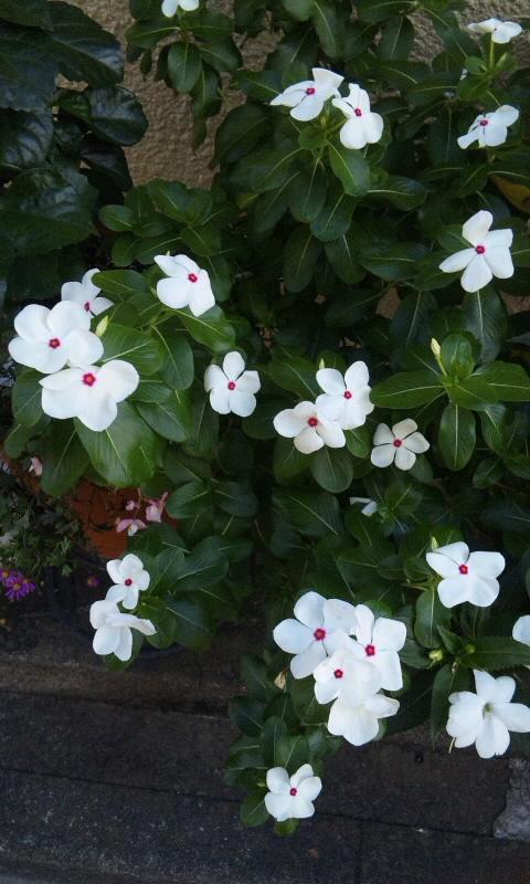 FLOWER_20130912