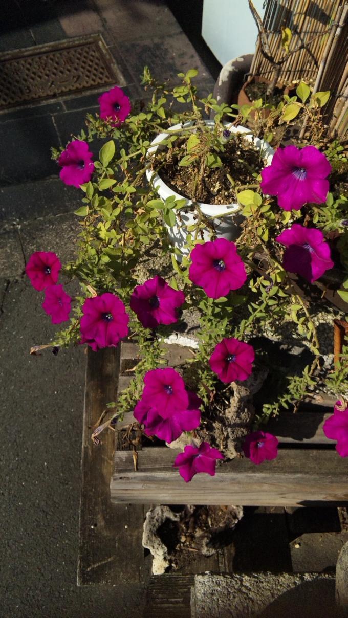 FLOWER_20130913