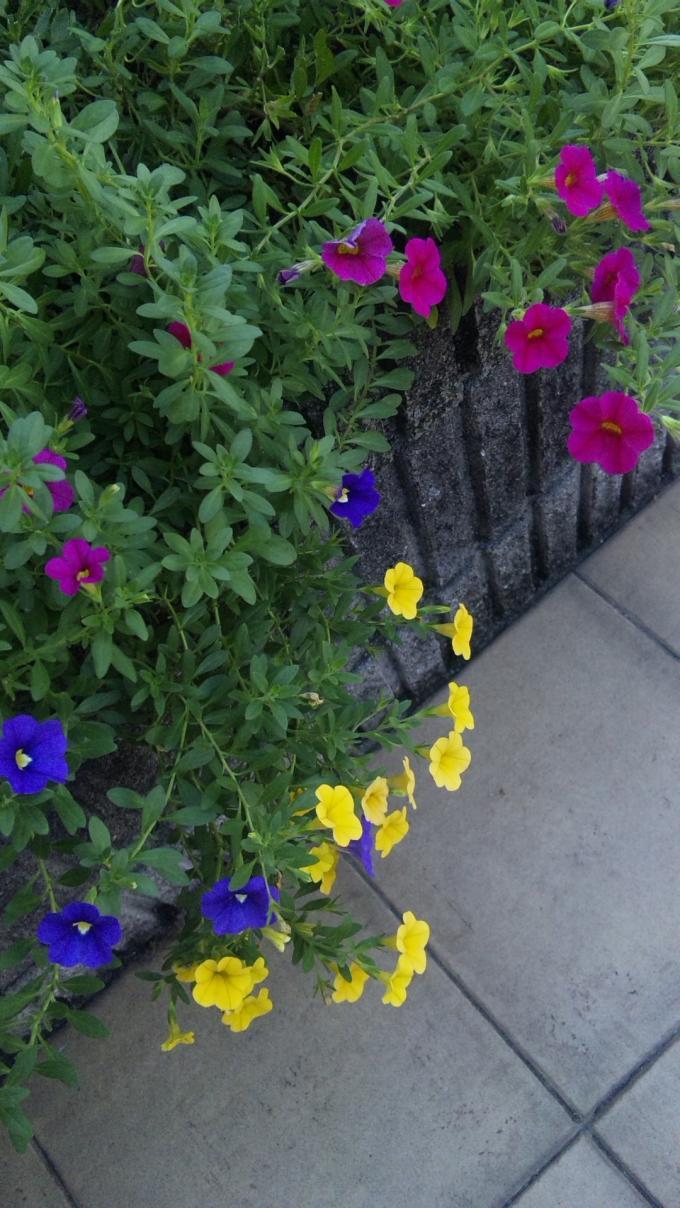 FLOWER_20130919