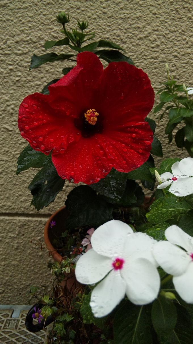 FLOWER_20130925