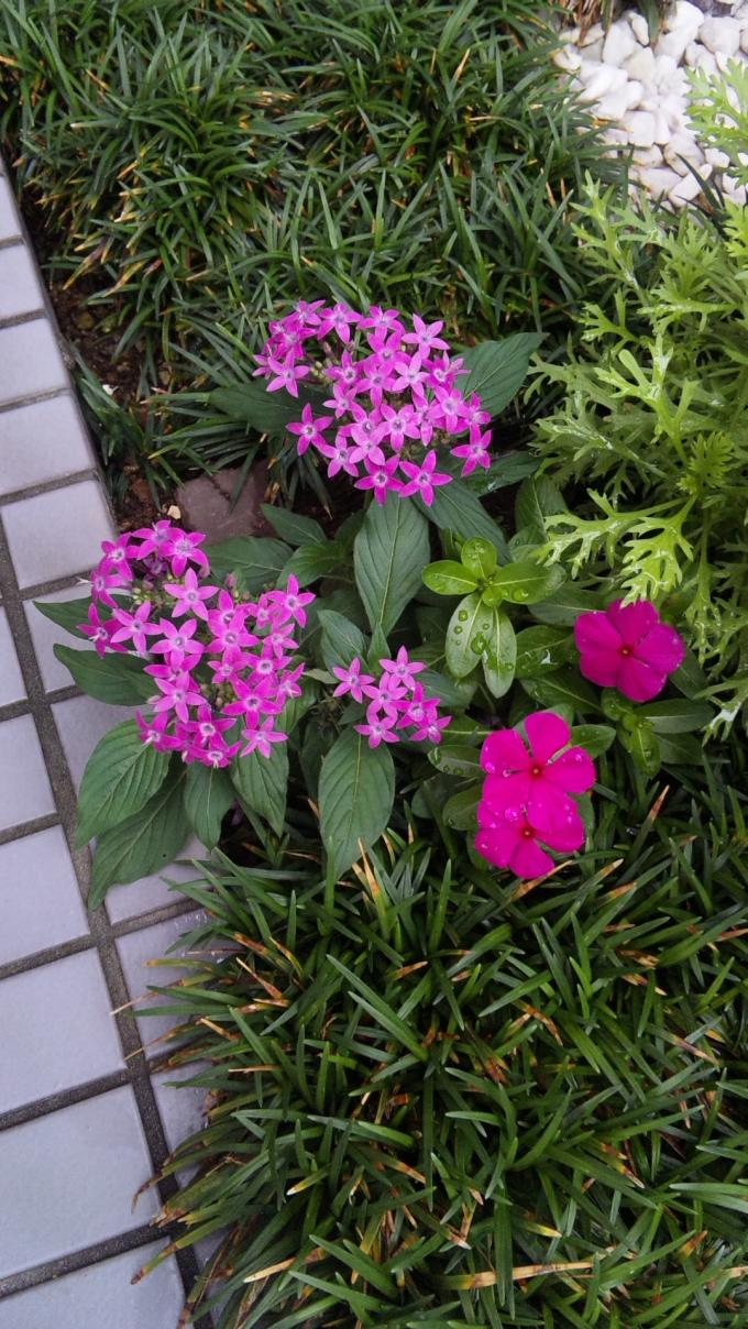 Flower_20131002