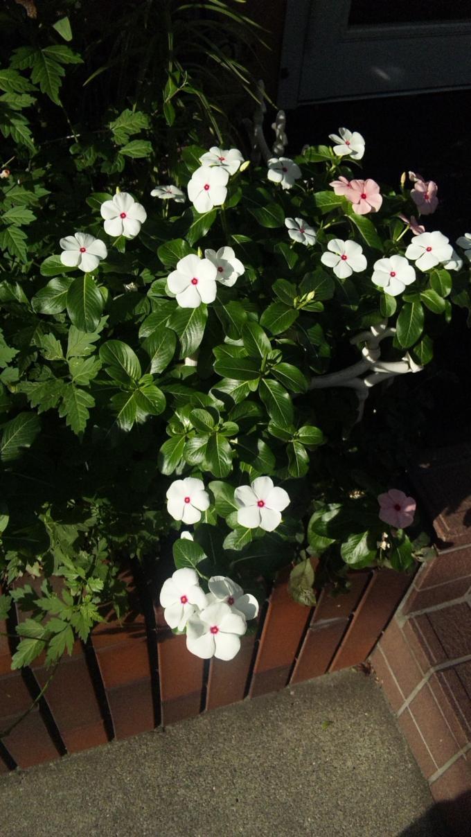 Flower_20131009