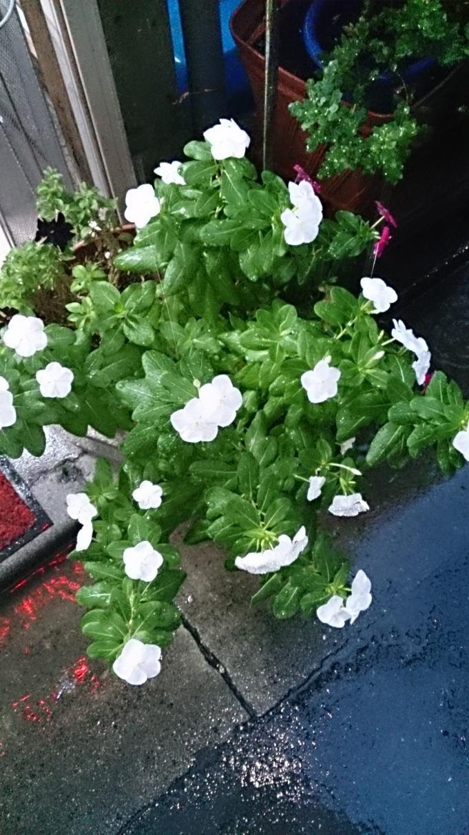 Flower_20131022