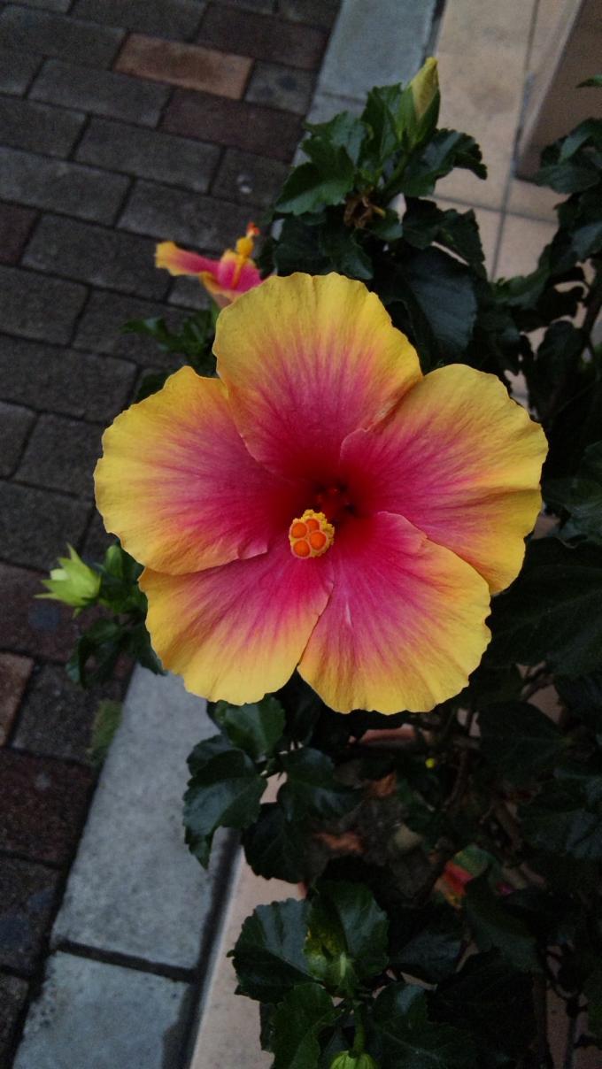 Flower_20110920