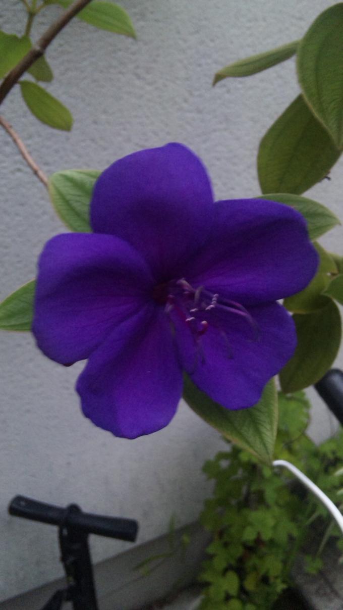 Flower_20110901