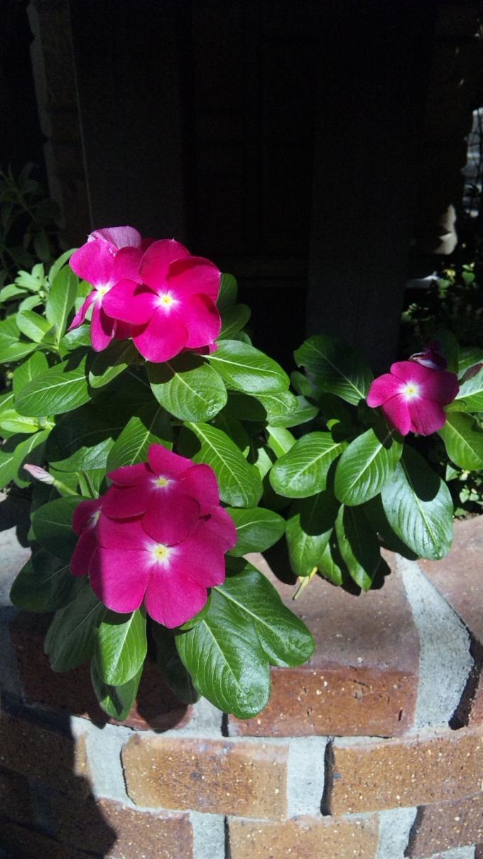 Flowers_20110915