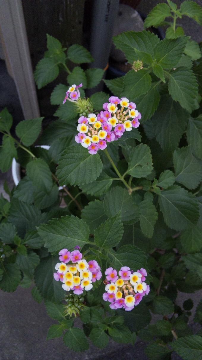 Flowers_20110916