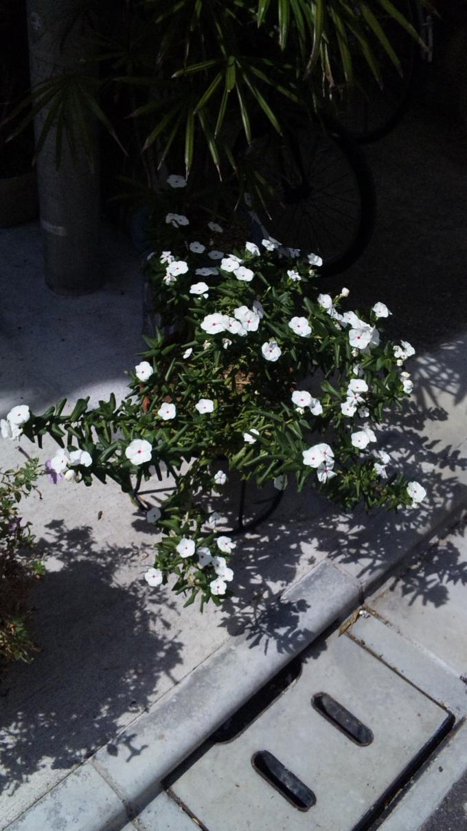 Flowers_20110917