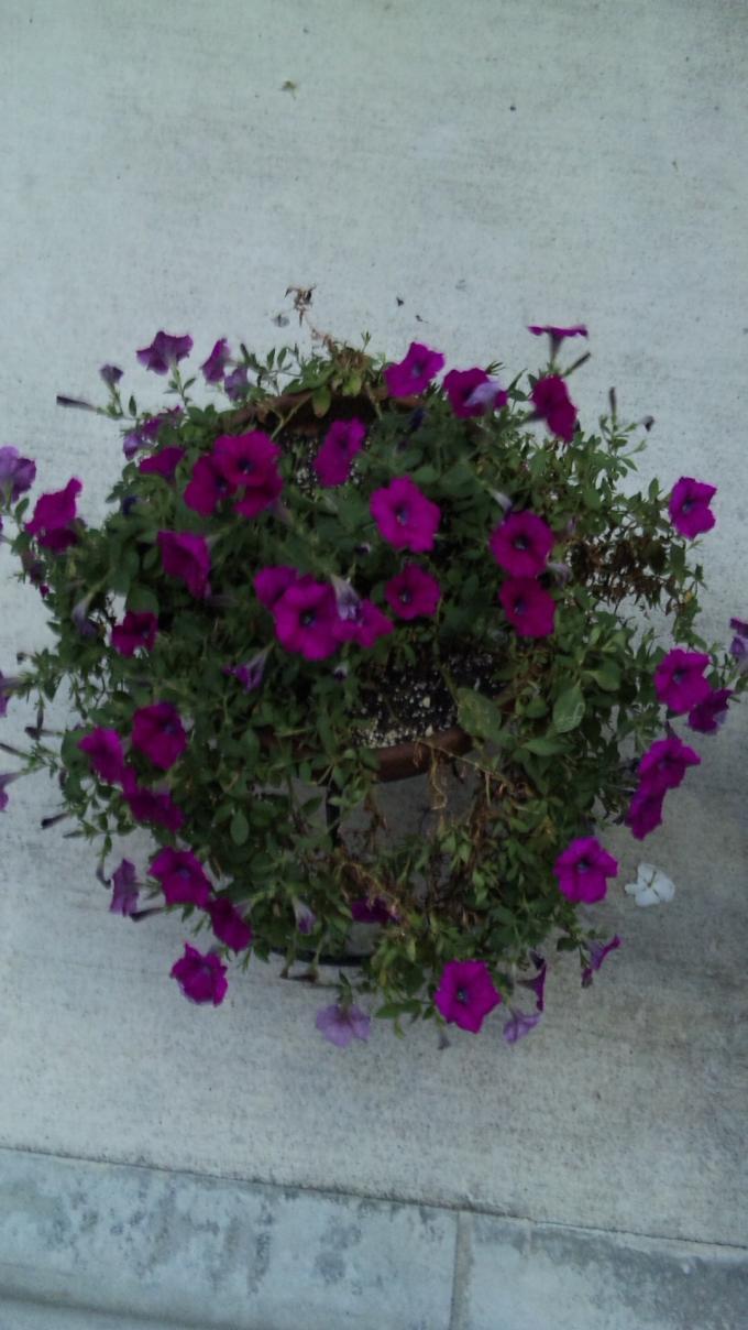 Flowers_20110908
