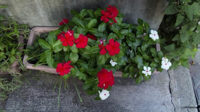 Flowers_20110909