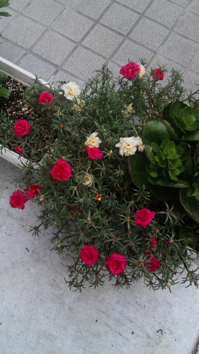 Flowers_20110904