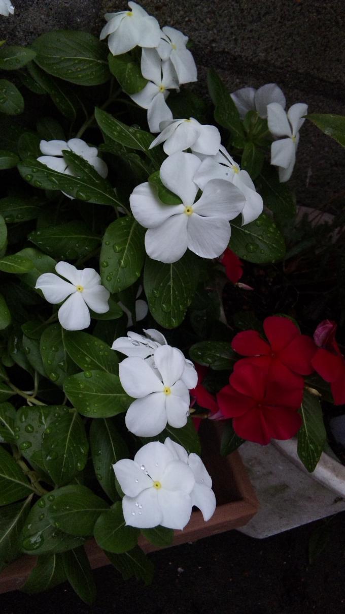 Flowers_20110902