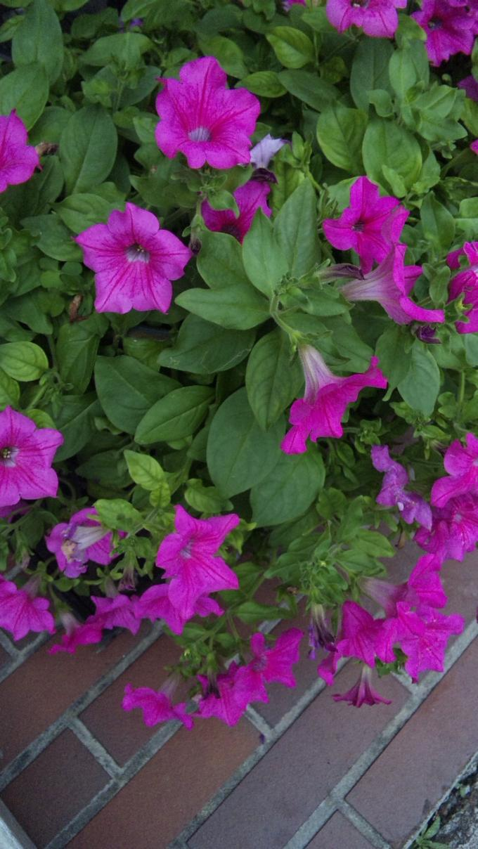 Flowers_20110901