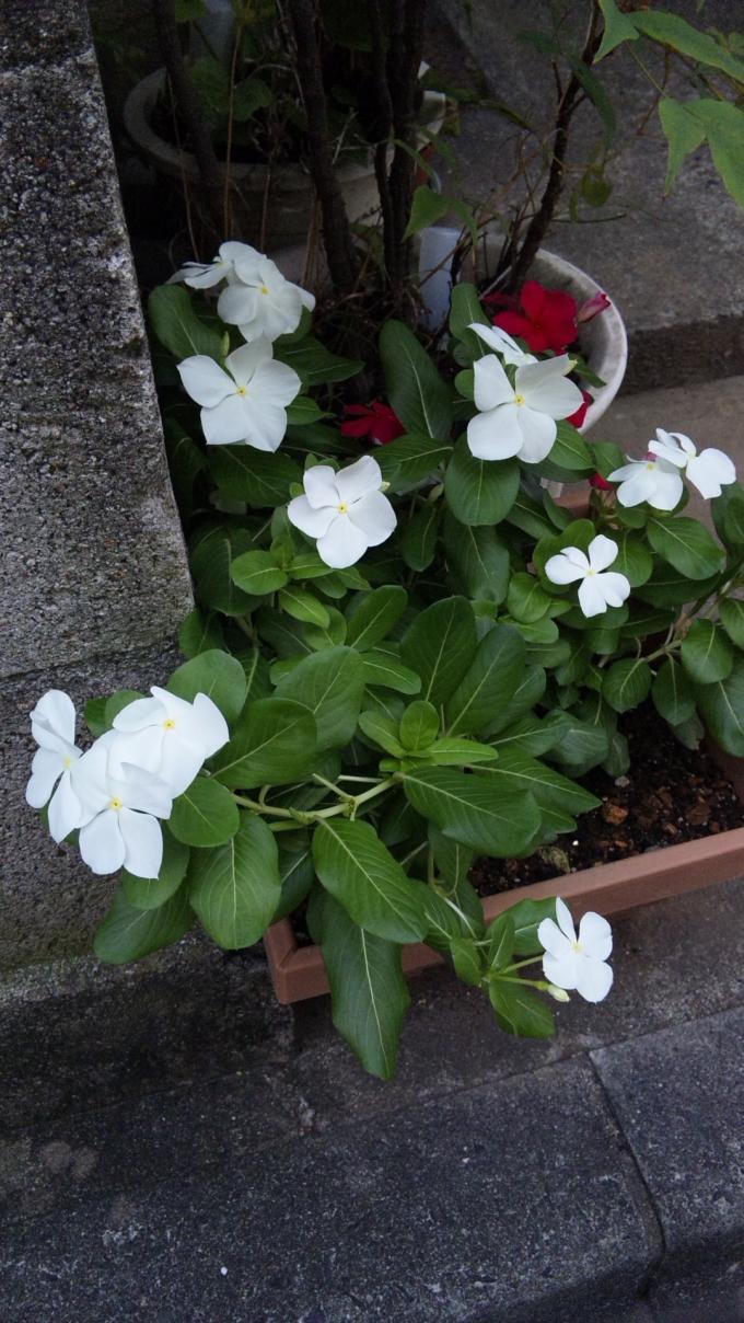 Flowers_20110903