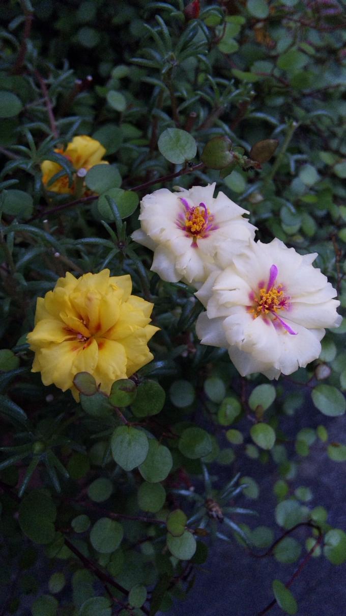 Flowers_20110905