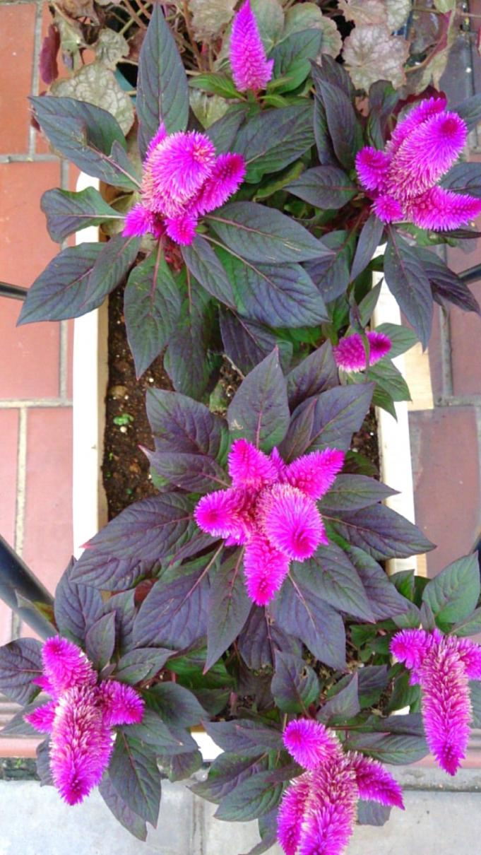 Flower_20131018