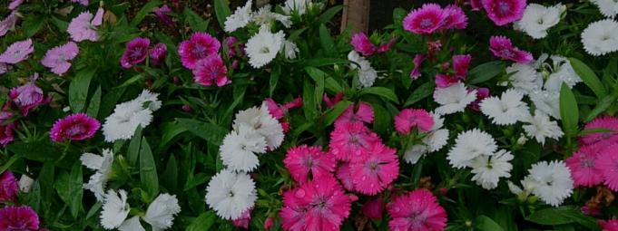Flower_20131031