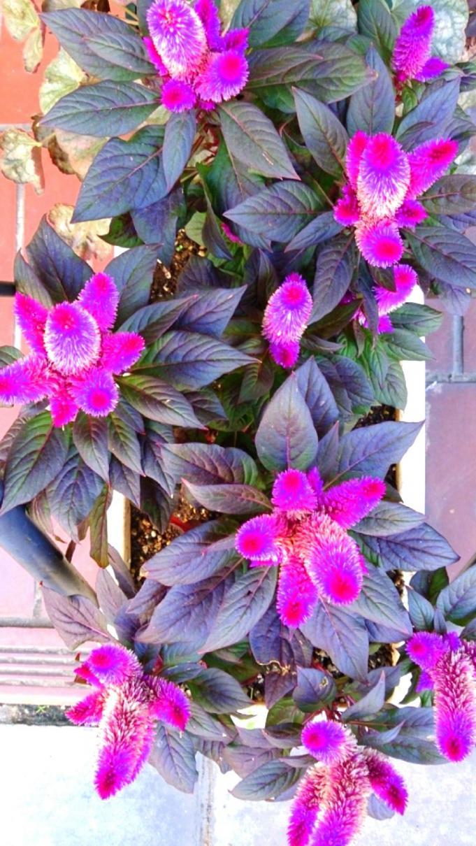 Flower_20131101