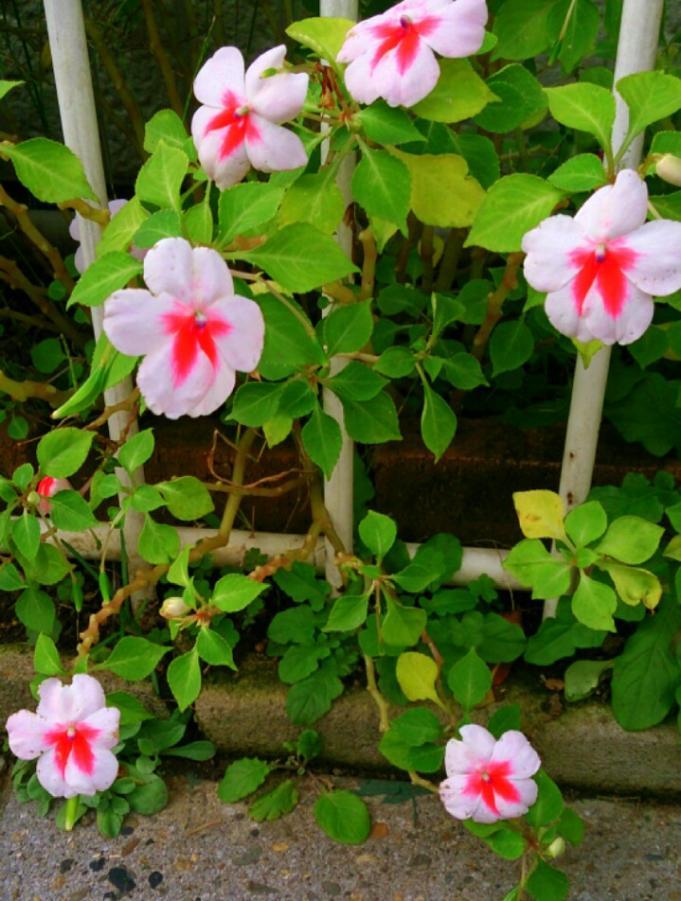 Flower_20131120