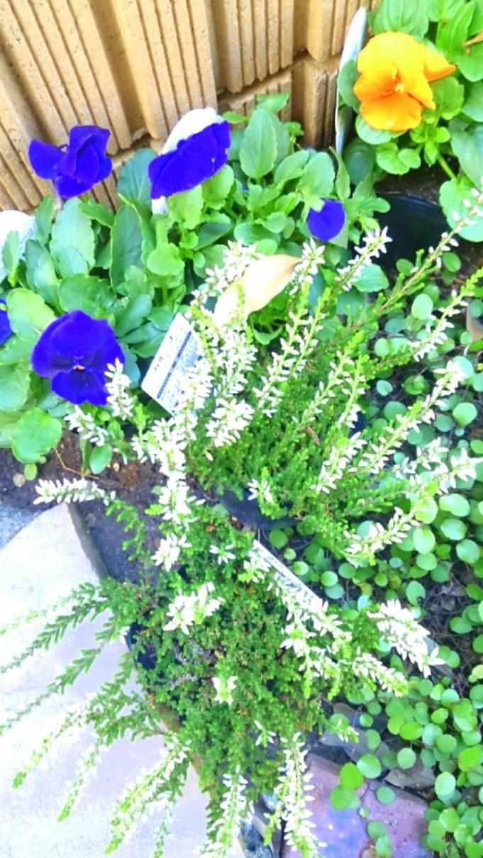 Flower_20131121