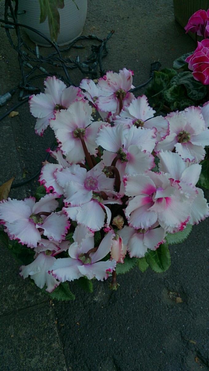 Flower_20131125