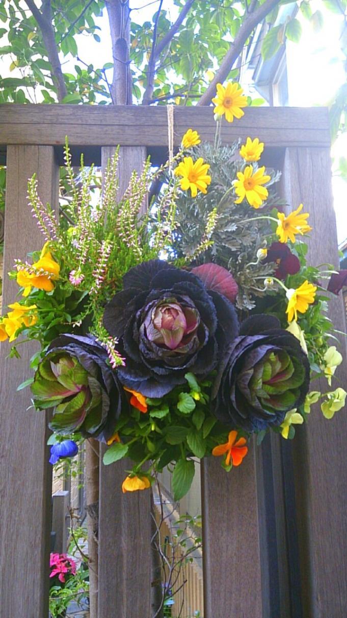 Flower_20131129