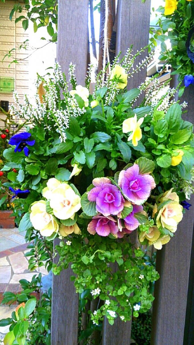 Flower_20131202