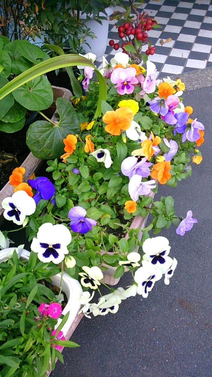 Flower_20131213