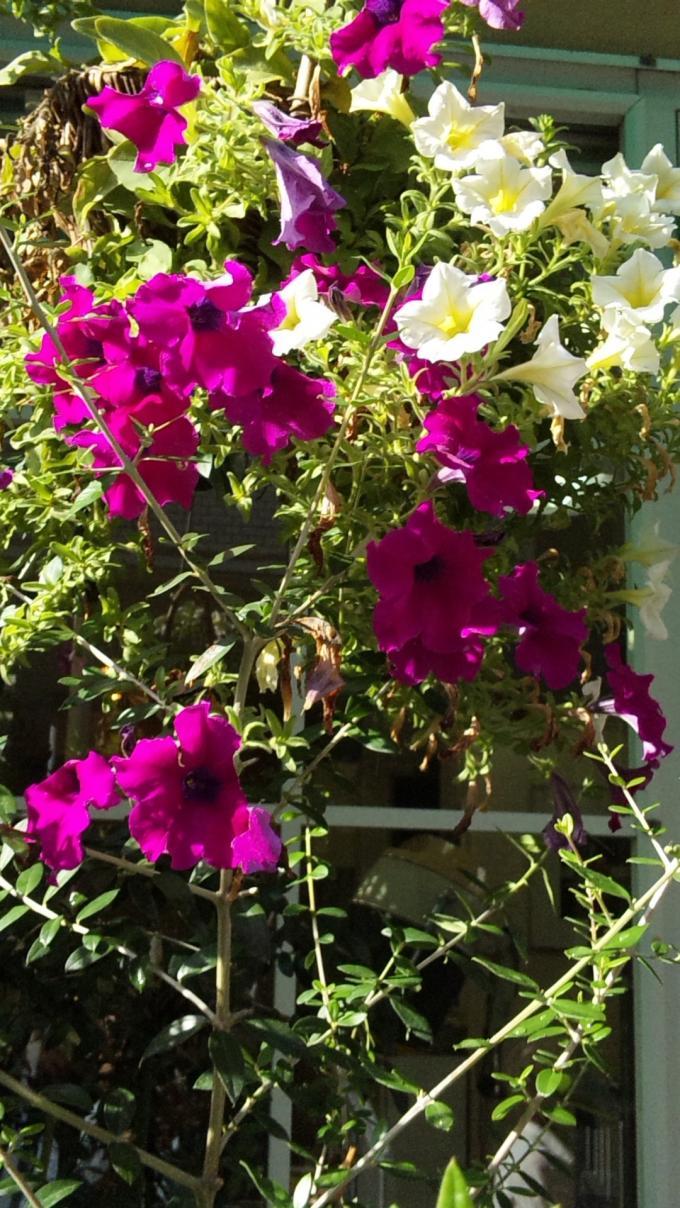 FLOWER_20130905