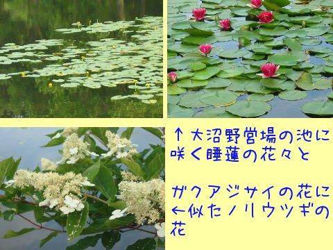 2013073183.jpg