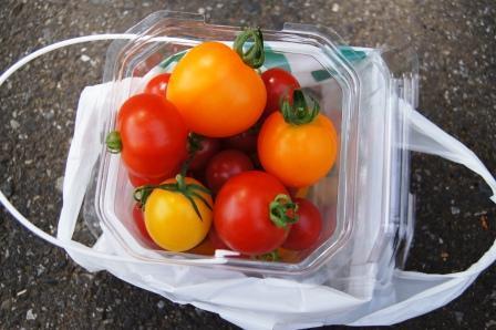 トマト狩りの成果