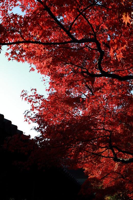 東福寺、3