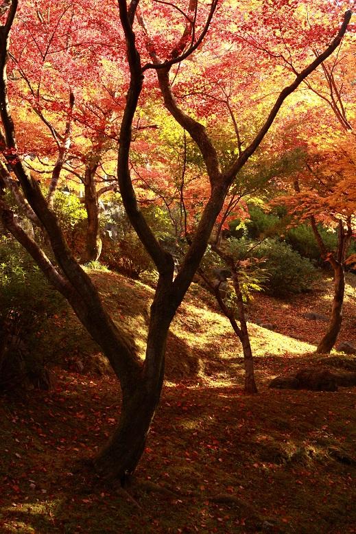東福寺、7