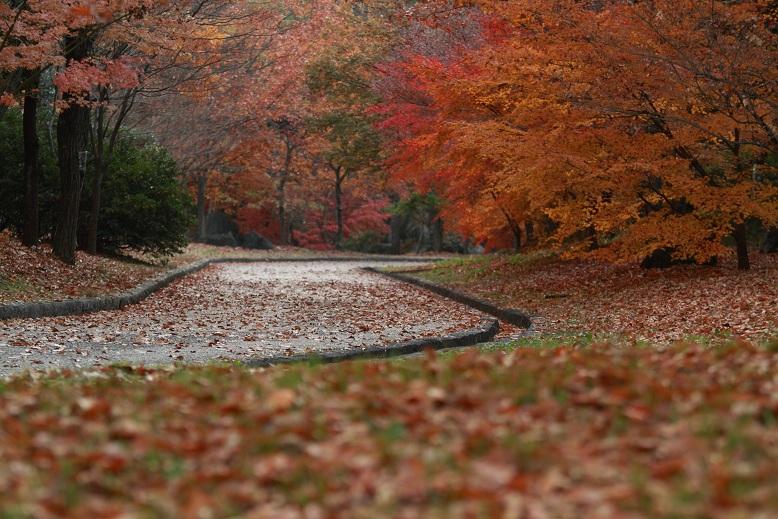 山田池公園、8