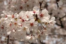 花満開-4
