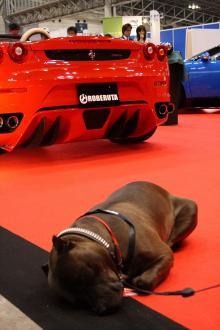 フェラーリと犬