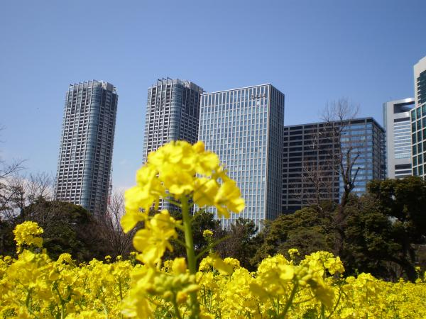 菜の花ビル