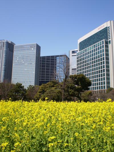 菜の花と摩天楼