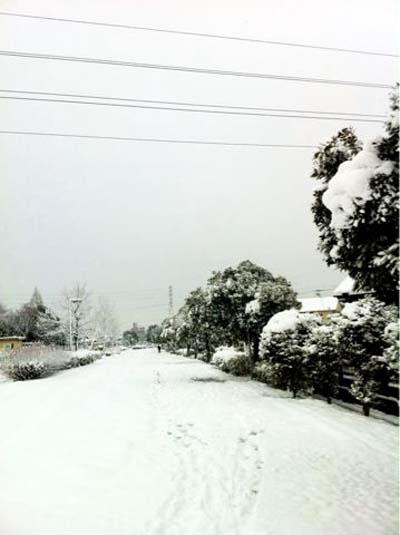 2011年1月初雪