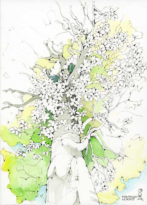 ブナの樹392
