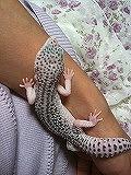 腕で眠るv