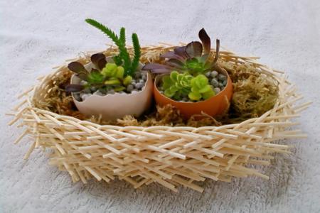 多肉卵の巣