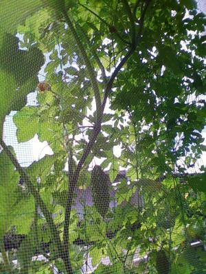 緑のカーテン裏側