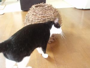 猫のスリィ~